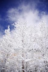 由布岳の霧氷