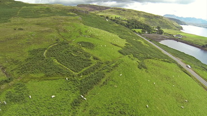 Camera flying over sheeps and grass in the Isle of Skye in Scotl