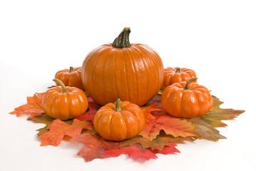 Beautiful Pumpkins Centerpiece Isolated