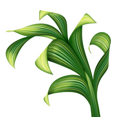 abstract illustration of green leaf foliage isolated on white