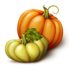 two pumpkins, seasonal harvest illustration