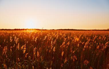 Grassy field illuminated by the setting sun