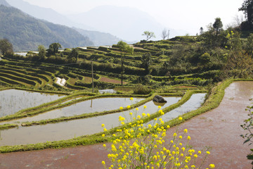 Rice terraces on the mountain for keeping water