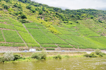 vineyard on green hills along Moselle river