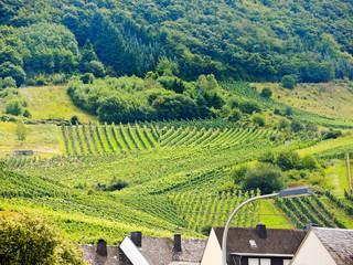 vineyard on green hills in Moselle region