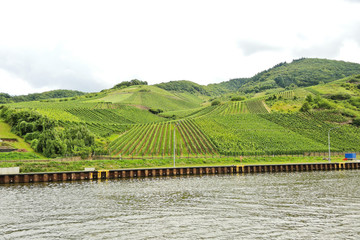 waterfront of Moselle river and vineyards