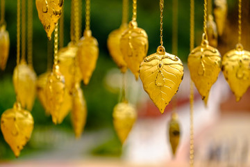 Golden Pho tree leave are hanging for decoration