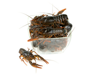 crawfish isolated on white