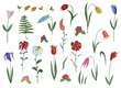 Flowers. Set of decorative elements
