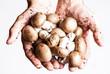 funghi nelle mani di un agricoltore - 70036390