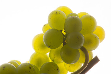Fresh green grapes Isolated on white-Sauvignon