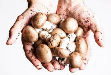 funghi nelle mani di un agricoltore
