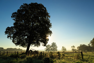 Tree in the sunny Dutch countryside.