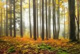 Autumn color forest