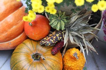 Mix of beautiful vivid terrace fall flowers and pumpkin