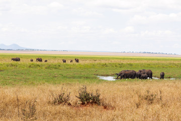 Elephants at the water