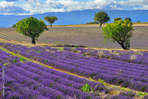 Provence landscape © Oleg Znamenskiy