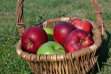 Pommes dans un panier d'osier