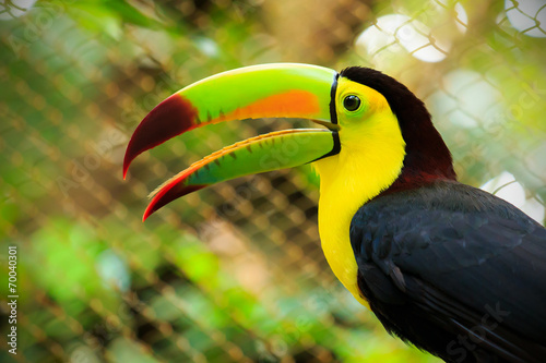 Aluminium Toekan Colorful toucan bird