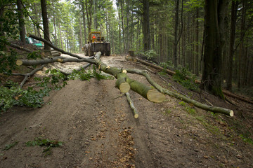 Forestry machinery trailing tree - Hauling wood