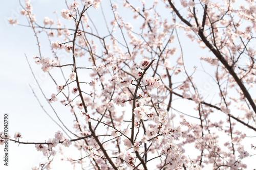 Naklejka beautiful flowers on the tree in nature