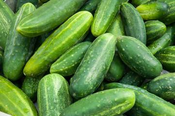 Gurken - cucumbers