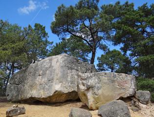 Forêt de Fontainebleau (site du rocher Fin)