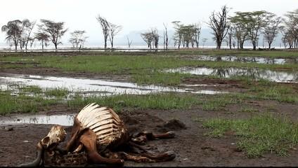 Dead wildebeest on the shores of Lake Naivasha.