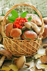 Fresh mushrooms and ashberry branch in basket