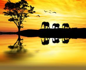 desfilando por la orilla del lago de Africa