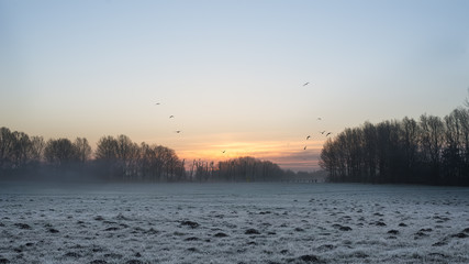 Molehills and birds in a park at dawn