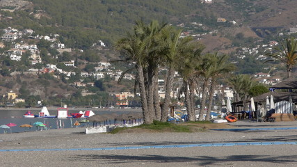oasis of palm trees on the beach of La Herradura, Spain