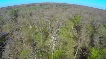 flying over spring forest