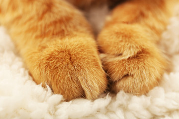 Cat's paws on towel closeup