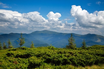 Mountain landscape with green plants on a background of blue sky