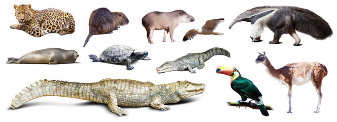 Set of  spectacled caiman and other animals of South America