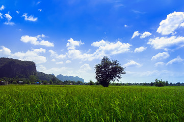 Meadows and Hills of Laos.