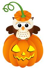 Owl in halloween pumpkin