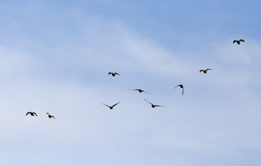 A flock of birds in the blue sky