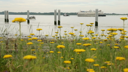 Barge and Flowers, Fraser River