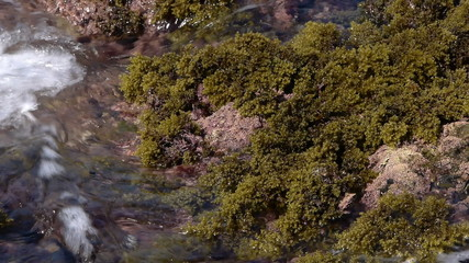 small waves caressing algae
