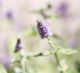 blue flower in wild nature