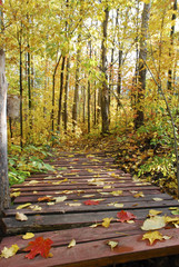 small bridge on a path