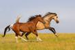 Two horse run gallop