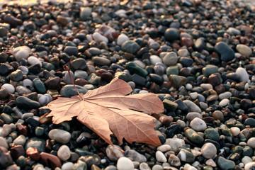 лист на гальке у моря
