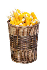 ripe corn in basket, isolated