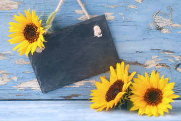 Blank Slate with Sun Flowers