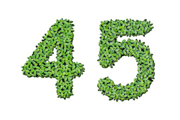 Duckweed alphabet letters - Number 4, 5