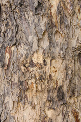 tree bark background texture pattern