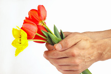 Hands presents a bouquet of red and yellow tulips